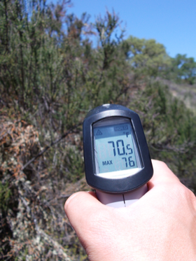 Using the infrared thermometer to measure branch surface temperatures.